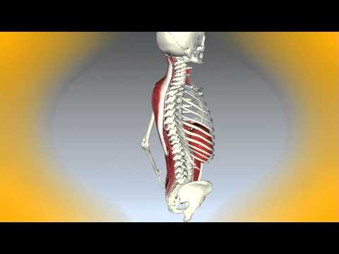 Remedio para el dolor de cuello agudo