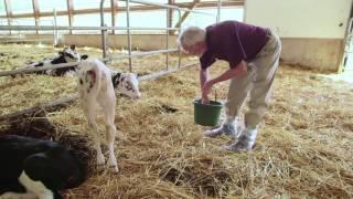 Loblaw Companies Ltd. - Animal Welfare Commitment