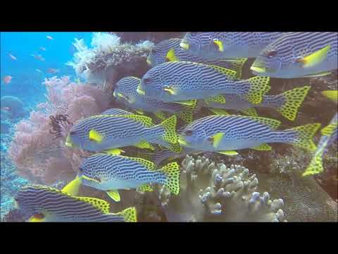 sweetlips-2 (...footage by Ralf Lipphardt)