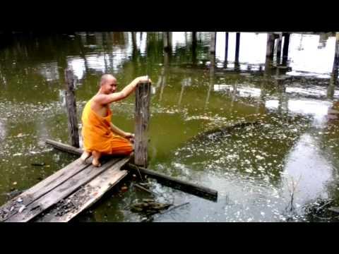 ปรสิตของชุมปลาแซลมอน