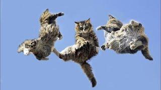 Летающие коты