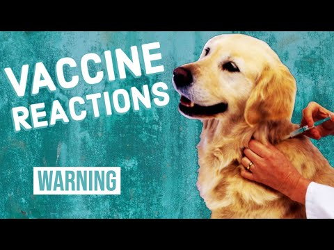 , title : 'Vaccine Reactions in Dogs