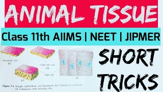 ANIMAL TISSUE SHORT TRICKS || AIIMS | NEET |JIPMER | CAREER TUTORIAL