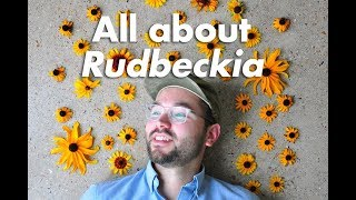 An In-depth Guide to Rudbeckia (Black-Eyed Susan)