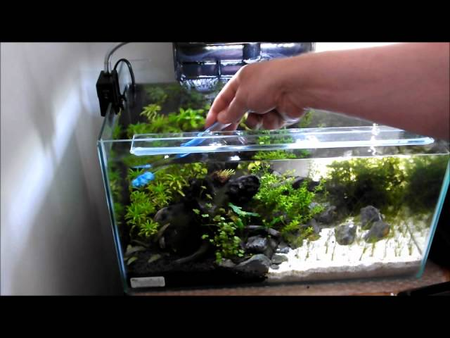 Cleaning a small planted tank