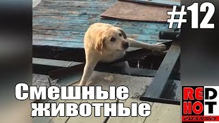 Смешные животные #12 Видео приколы с животными 2018