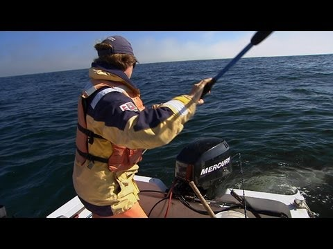 Great White Highway – Shark Week 2012 (Discovery Channel)