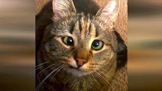 Приколы с животными 2019 #7 Юморные коты и собаки 2019 январь. Кошки смешат людей до слез.