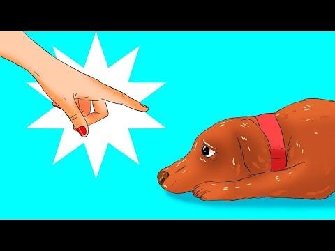 12 schädliche Dinge, die du ohne es zu merken deinen Hund antust