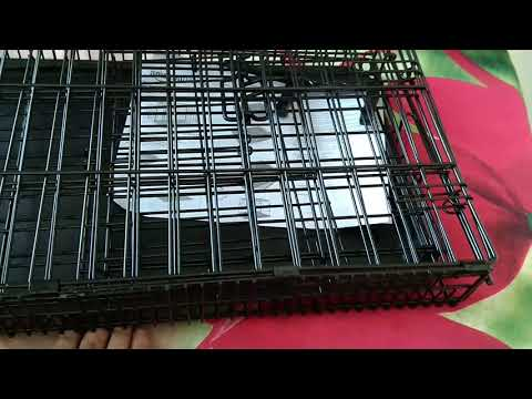 22 inch dog crate ,or cage I buy for rabbit , don't buy for dog ,it's very small for dog Rs 639 amaz