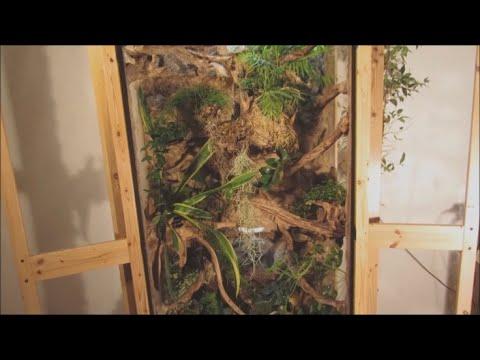 Vitrinenschrank Terrarium | Rückwand mit Abflusssystem | DIY Setup