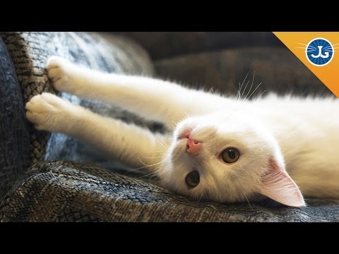 How to Stop Your Cats From Scratching Furniture