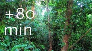 Rainforest - Birdsong at Sunrise - 1,5HOUR Nature Sounds #6, Costa Rica Soundscapes