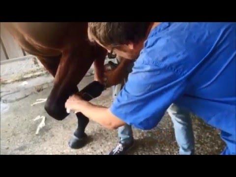 Lesioni nodello nel cavallo - Fluido prezzo articolazioni umane