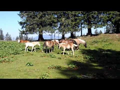Konji na Starih stanih