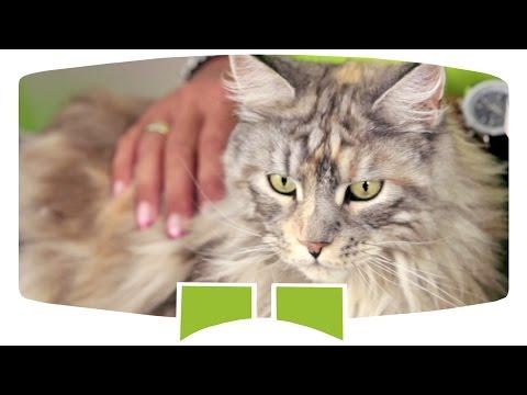 Wie ernähre ich meine Katze richtig? Nahrungsergänzung für Katzen | Grau Tiernahrung