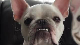 Power Of Humor   Weird Dogs   Facebook