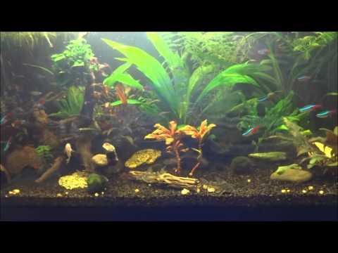 Los peces de acuario los helmintos