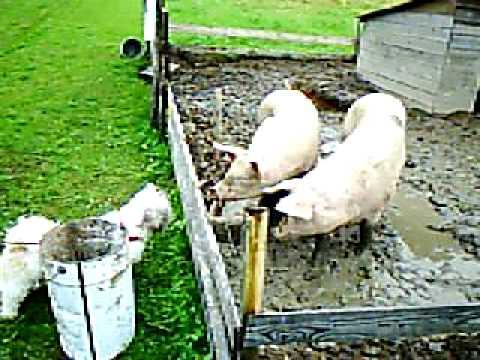 Dejting enhagen- ekbacken