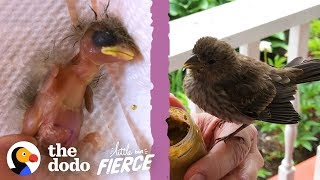 Woman Finds A Baby House Finch Bird On Her Porch   The Dodo Little But Fierce
