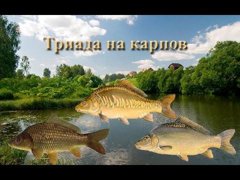 Русская Рыбалка 3.99 Триада на карпа на Рыбхозе