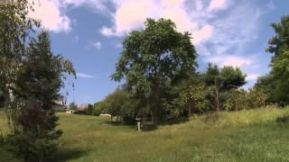 In The Garden - Tree Of Heaven