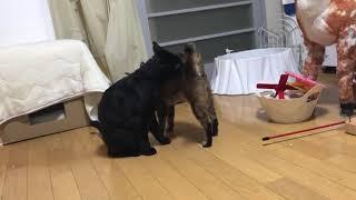 レオンとチコちゃんの日々ver3