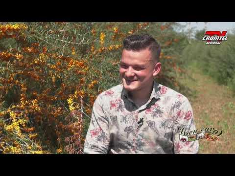 Papiloma en hombres diagnostico