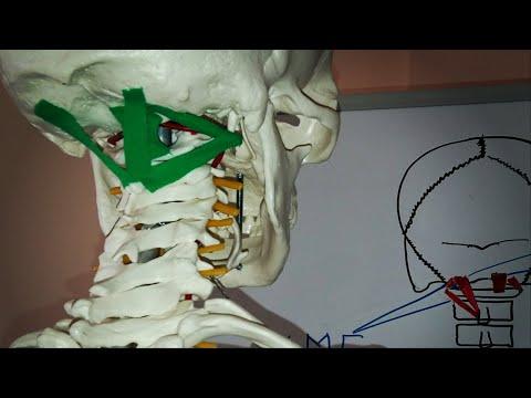 Субхондральный склероз грудного отдела позвоночника что это такое