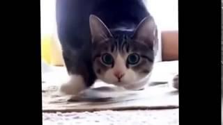 смешные видео о котах