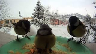 HUNGRY BIRDS - La Ballata Degli Uccellini Affamati!!!