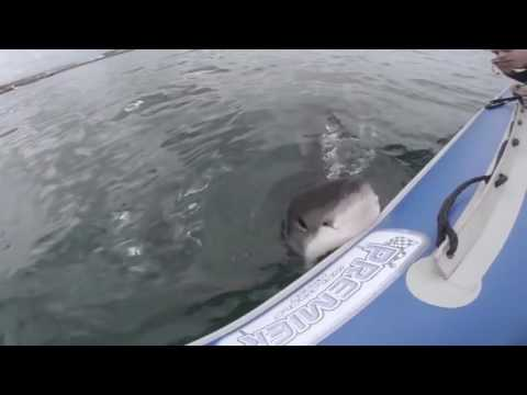 Extreme animal attacks on humans (WATER EDITION ... ▶3:35