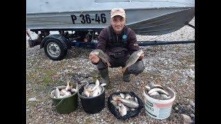 Ловля окуня на куршском заливе летом