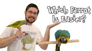 Small Parrot vs Large Parrot - Which Is Easier?