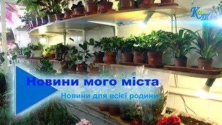 А у вашій оселі всі квіти безпечні?
