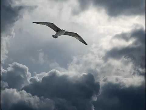 Дыши   Взгляни на  небо