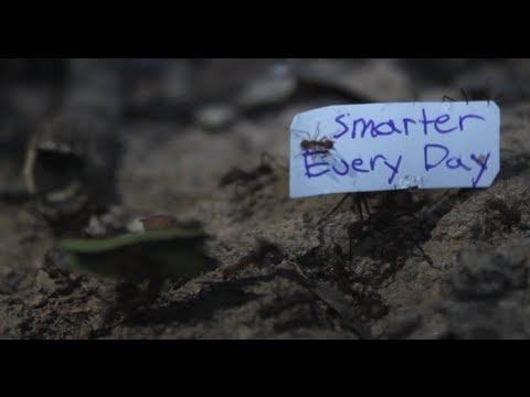 Jak přimět mravence nést cedulku