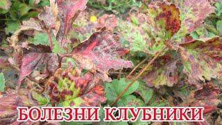 Бурая пятнистость листьев клубники видео