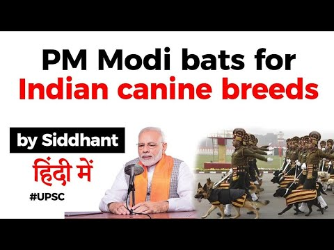 PM Modi bats for Indian canine breeds in his Mann Ki Baat, Know specialities of India Dog Breeds