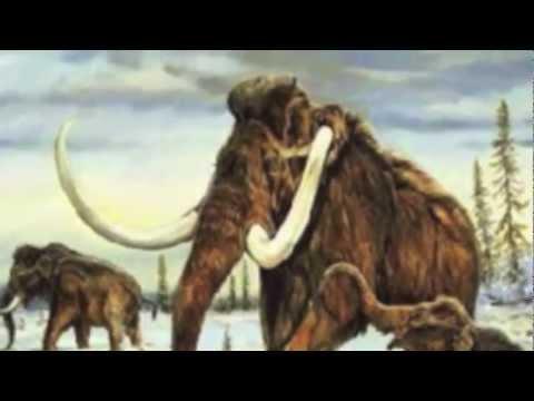 Asparagii Whooley Mammath (12-17-2011)