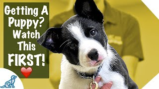 Puppy First Day Home Tips - Professional Dog Training Tips