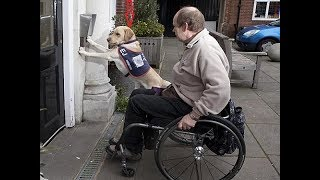 Dogs Helping their owners in their daily jobs - The best dogs in the world