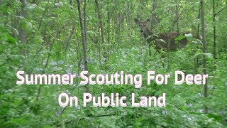 Summer Scouting for Deer on Public Land