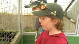 preview picture of video 'Crocodiles Galore'