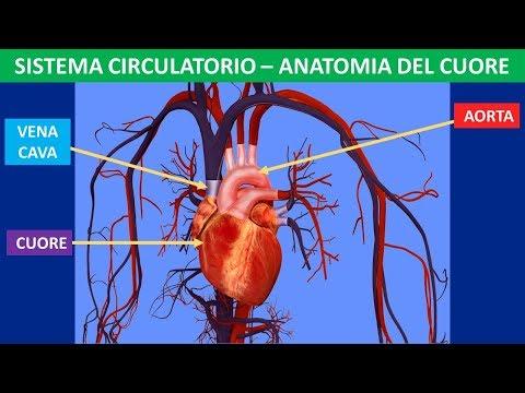 Clinica asterischi vascolari