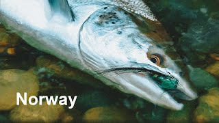 Как ловить атлантического лосося в норвегии