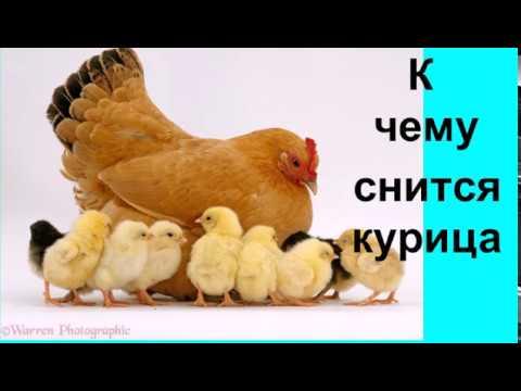 К чему снится курица.Сонник от Ирины