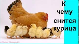 Если вам приснилось что вас клюет курица