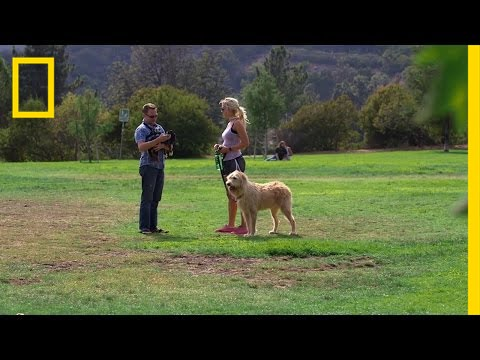 Finding Love at the Dog Park   Hacking the System thumbnail