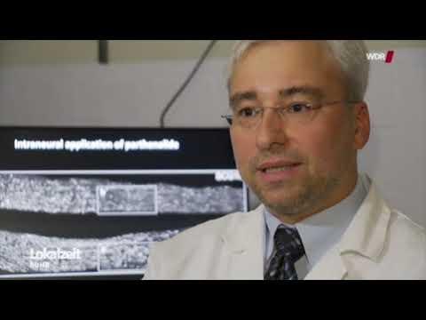 Mutterkraut-Wirkstoff fördert Nervenregeneration